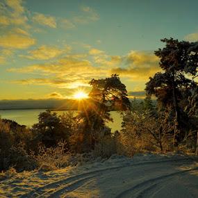 Winter morning by Alf Winnaess - Uncategorized All Uncategorized