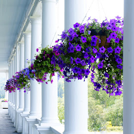 Pansies on the porch by Debra Graham - Buildings & Architecture Public & Historical ( pansies, porch )