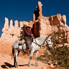 Bryce canyon cowboy guide by Andy Antipin - Animals Horses ( cowboy, rock formations, nature, landscape, bryce canyon )
