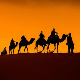 by Joško Šimic - Landscapes Deserts ( sand, convoy, camel, desert, sand dune, silhouette, sunset, sahara desert, dromedary camel, camel train )