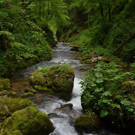 Life is green! by Gugut Razvan - Nature Up Close Water ( water, mountain, fauna, flora, river )