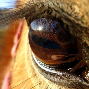 A look into their soul by Carly Stine - Animals Horses