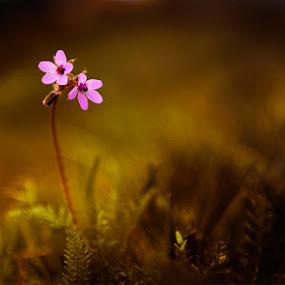 beauty by Balázs Kovács - Nature Up Close Flowers - 2011-2013 ( proteus, nature, flower )