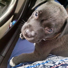 Lost now Found by Terri Moore - Animals - Dogs Puppies