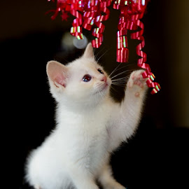 by RJ Photographics - Animals - Cats Kittens