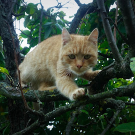 Why did you put me up there by Antonio Knezevic - Animals - Cats Portraits ( cat, tree, paws, lightroom, cute )