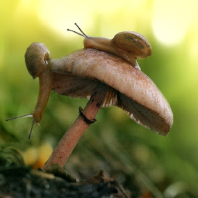 Two Little Companions by Alit  Apriyana - Nature Up Close Mushrooms & Fungi