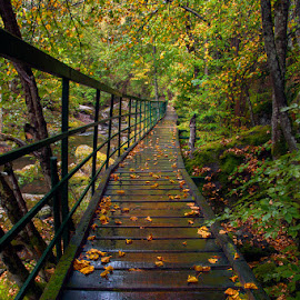 First steps of Autumn by Nikolay Shopov - Buildings & Architecture Bridges & Suspended Structures ( beautiful autumn, mountain, green, beautiful, 2016, moss, smolyan, forest, travel, yellow, nature, leafs, autumn, fall, beautiful mountain, trees, trip, bridge, rhodope, stones, bulgaria, river )
