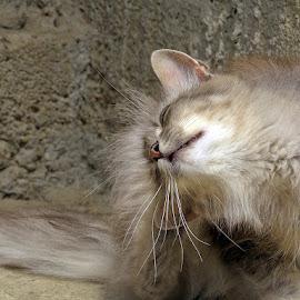 ..zanesenjaštvo!,...čini mi se da mu je takav izvanjski izgled!?..... by Katica Pecigoš-Kljuković - Animals - Cats Portraits ( sisak brod čigoč rode )