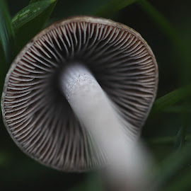 by Jenny Solberg Warfield - Nature Up Close Mushrooms & Fungi