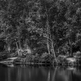 Peace  by Todd Reynolds - Black & White Landscapes