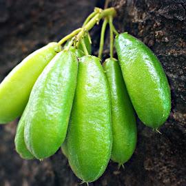 Blimbing Jawa by Menuel John  Magal - Food & Drink Fruits & Vegetables