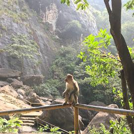 Sitting monkey....🐒 by Indhumathi Karthikeyan - Instagram & Mobile iPhone