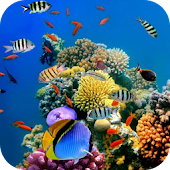 Free funny and wonderful fish APK for Windows 8