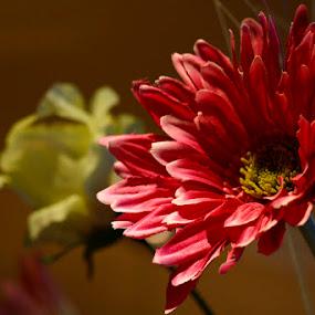 For Aida by Tigi Borg - Nature Up Close Flowers - 2011-2013 ( indoor, nature, color, 2012, tigiphoto, flower )