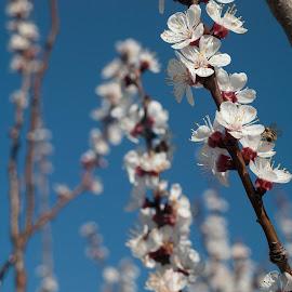 by Ovidiu Armulescu - Nature Up Close Gardens & Produce