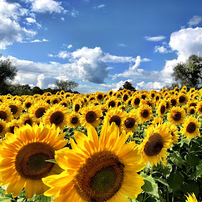 by Donna Silva - Flowers Flower Gardens (  )