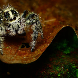 by Duewie Setya - Animals Insects & Spiders