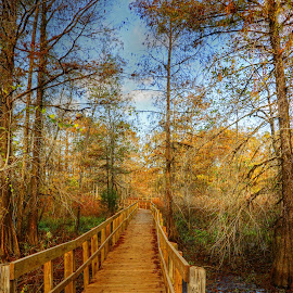 WALKWAY IN LAKE MARTIN SWAMP by Ron Olivier - Digital Art Places ( walkway in lake martin swamp, , Christmas, card, Santa, Santa Claus, holiday, holidays, season, Advent )