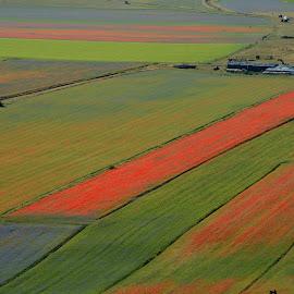 Castelluccio 15 by Bruno Brunetti - Landscapes Prairies, Meadows & Fields ( colors, flowers, italy, castelluccio, fields,  )