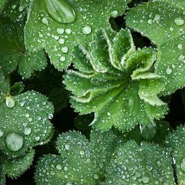 Rain Drops by Jon Kinney - Nature Up Close Water