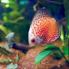 by Kishu Sing - Animals Fish