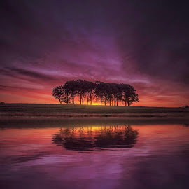 New day by Kieran O Mahony  - Landscapes Sunsets & Sunrises ( clouds, water, reflection, lake, sun, colour, sky, tree, color, sunset, trees, cloud, sunrise )