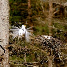 Just Chillin' by Zeralda La Grange - Digital Art Animals ( #nature, #trees, #animals, #birds, #herons, #nesting )