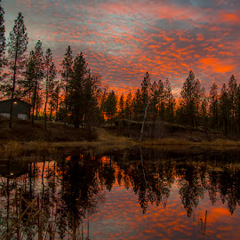 Winter Sunset by Lynn Kohut - Landscapes Sunsets & Sunrises ( home, reflection, winter, sunset, landscape, pond, dusk )