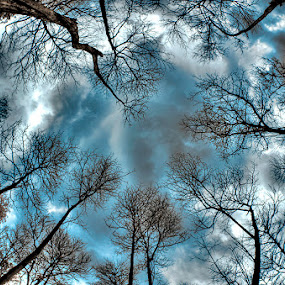 by Stanley Chan - Landscapes Forests