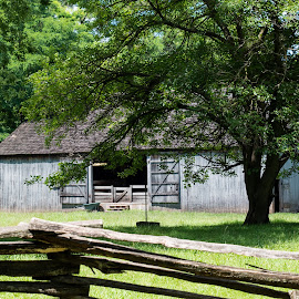 Barn, Tree and Fence by Kimberly Gibson - Buildings & Architecture Other Exteriors ( rustic americana, indiana, park, barn, hamilton county, 2016, fishers, barns, conner prairie, landscape,  )