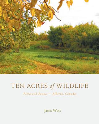 Ten Acres of Wildlife