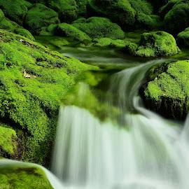Gljun by Bojan Kolman - Nature Up Close Water