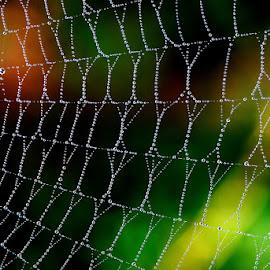 by Vinod Gajjar - Nature Up Close Webs