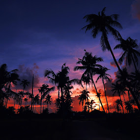Sunset  by Mohammad Fairuz - Landscapes Sunsets & Sunrises ( orange, coconut, tree, blue, sunset, beach )