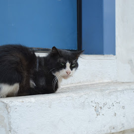 Stray cat by Maria Gerolymatou - Animals - Cats Portraits ( black and white cat, cat, old cat, stray cat, black cat )