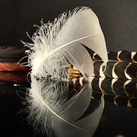 Feathers by Janette Ho - Artistic Objects Still Life