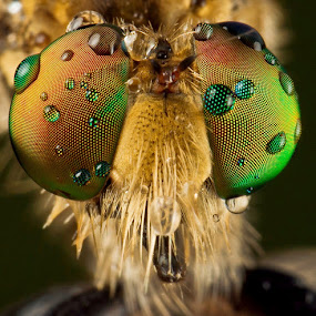 Close Up.... by Vincent Sinaga - Animals Insects & Spiders