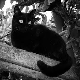 by Simona Limberea - Black & White Animals