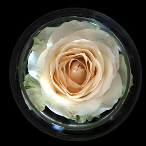 Romantic White by Edwin Pfim - Artistic Objects Glass