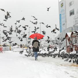 Kar_kuş by Veli Toluay - City,  Street & Park  Street Scenes ( kar, kış, fırtına, eminönü, istanbul )