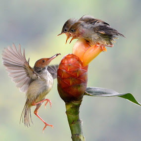 feeding time by Yadi Setiadi - Animals Birds ( bird, wildbirds, wild, wildlife littlebirds, feed, animal )