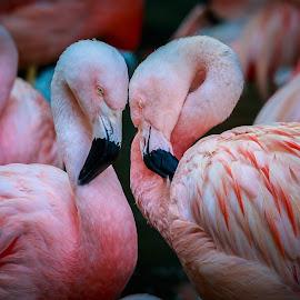 Dark and Light by Rananjay Kumar - Animals Birds ( #portrait, #outdoor, #wings, #birds, #wild, #canon )