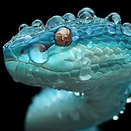 viper by Yan Hidayat  - Animals Reptiles