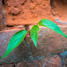 Plant by Koushik Mondal - Nature Up Close Leaves & Grasses ( plant, tree, climber, grower, seedling, creeper )