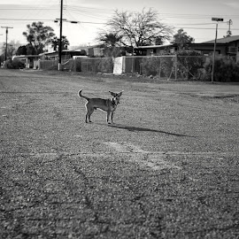 What are you doing in my neighborhood? by Michael Keel - Animals - Dogs Portraits ( dogs, salton sea )