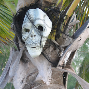 Day of the Dead Mask by Laurel Rowe - Public Holidays Other ( holiday, palm tree, mexican, mask, day of the dead )