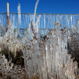 Frosty Morning on the farm by Ann Rainey - Landscapes Weather ( cold, ice, frost, frozen, icecycles )