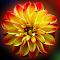 aIMG_1041a.jpg