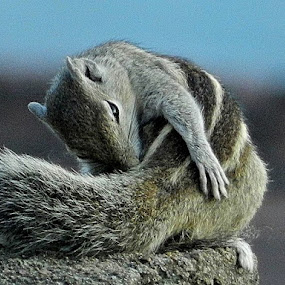 Squirrel chasing its own tail by Govindarajan Raghavan - Animals Other Mammals